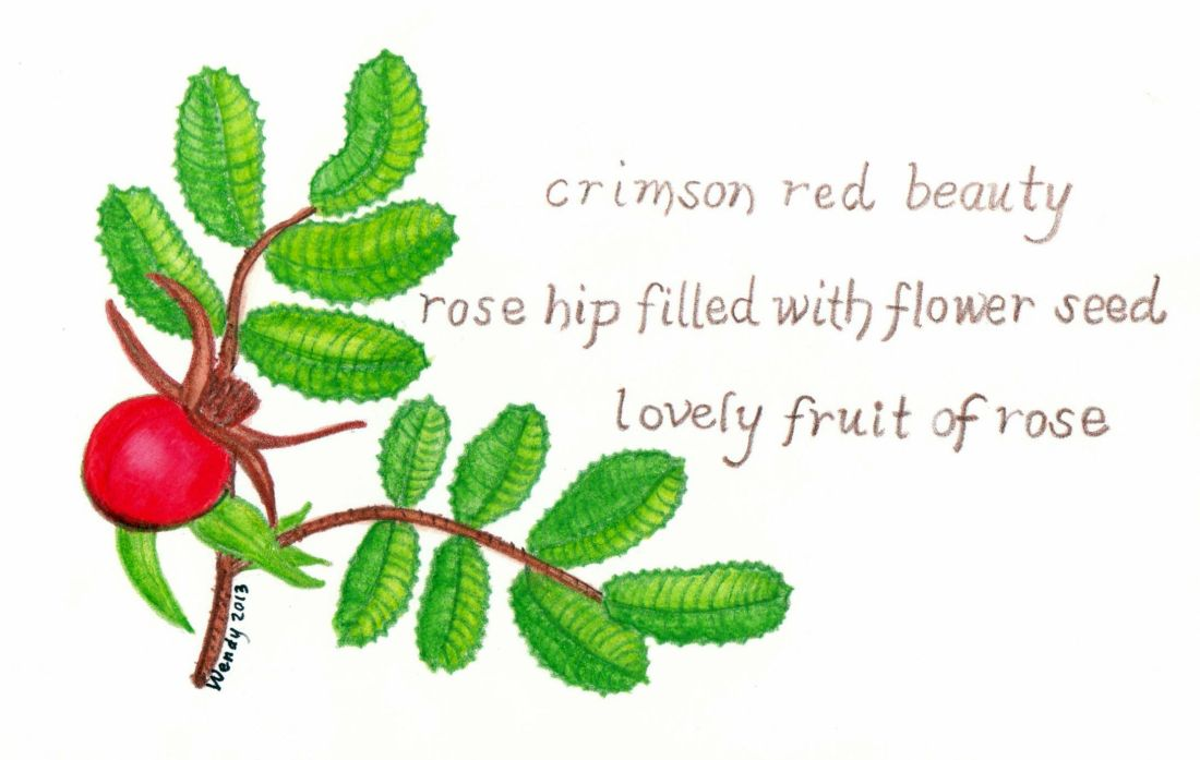Rose Hip Haiga