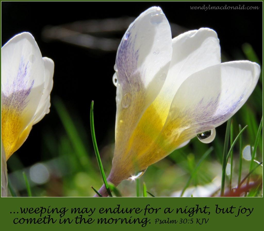 Sorrows Turned to Joy Infertility/Adoption Memoir Story Wendy L. Macdonald HeartWingsBlog