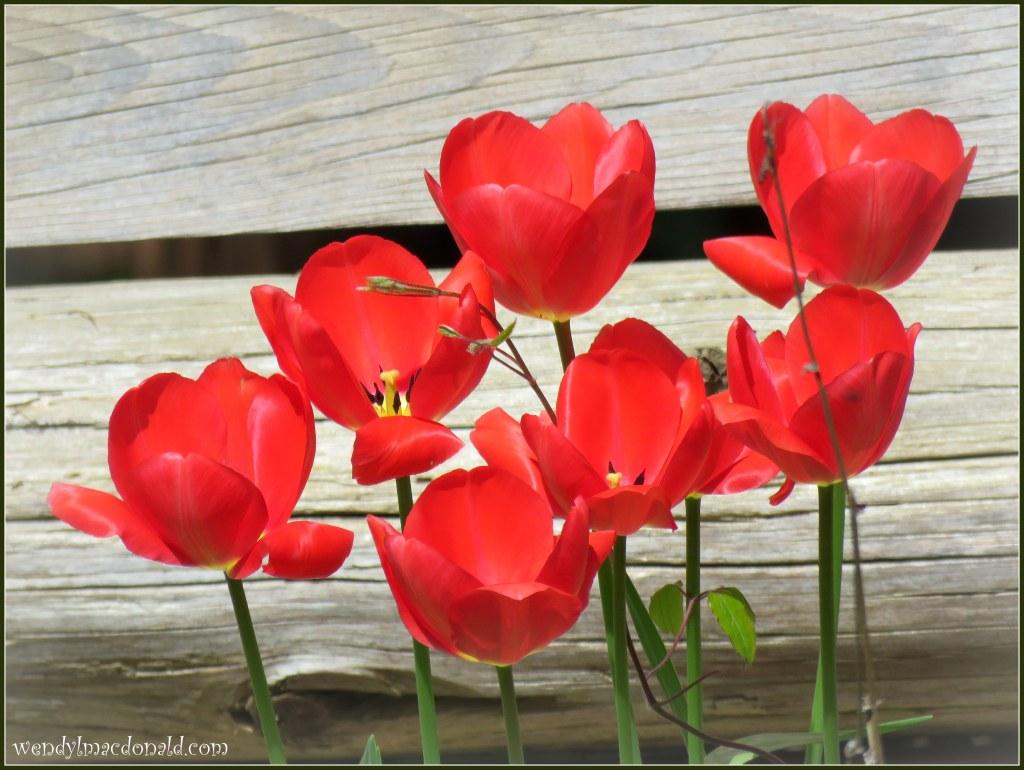 Five Ways to Fan the Flames of Faith: Part Five Wendy L. Macdonald blog
