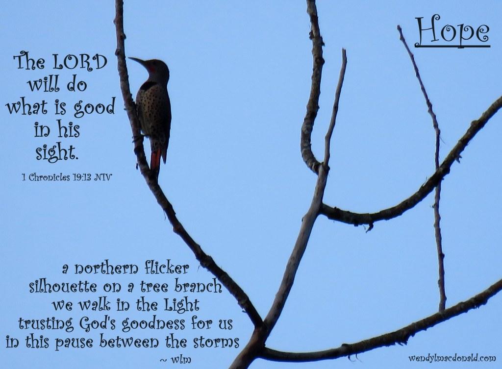 God is Good #tanka by Wendy L. Macdonald with northern flicker image greenlightlady.wordpress.com
