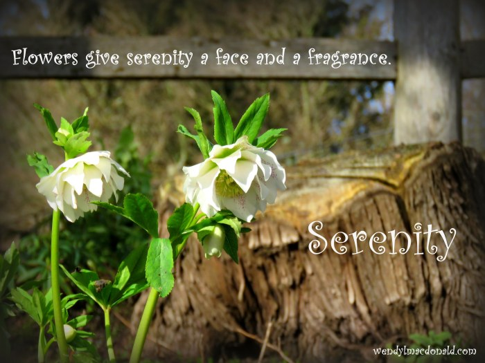 Serenity Quotes and Poems for the Writer's Heart www.wendylmacdonald.com