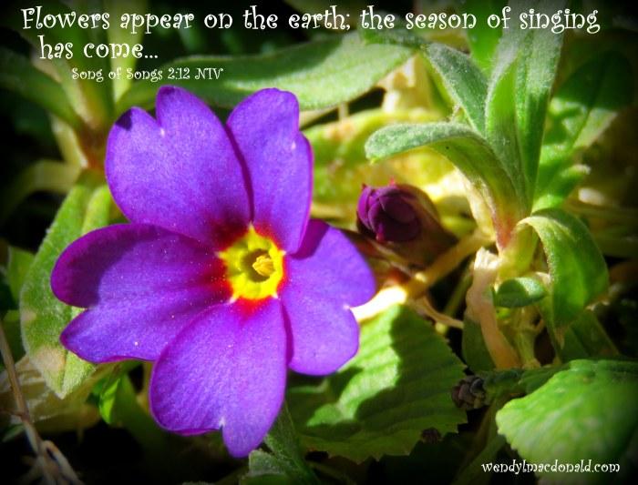 Season of Singing: Spring Flowers &Poetry