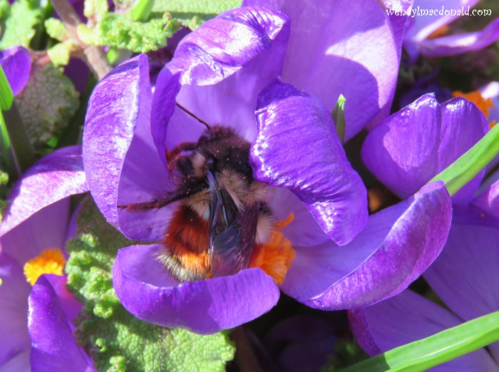 Season of Singing: Spring Flowers & Poetry wendylmacdonald.com by Wendy L. Macdonald