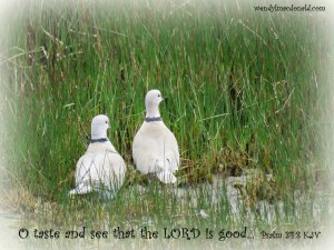 Spring Melt Poetry Devotional by Wendy L. Macdonald