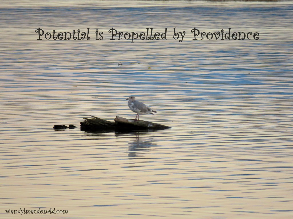 Potential is Propelled by Providence (Five Minute Friday) Wendy L. Macdonald
