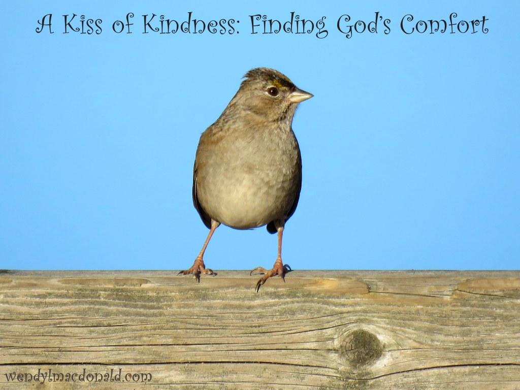 A Kiss of Kindness: Finding God's Comfort wendylmacdonald.com