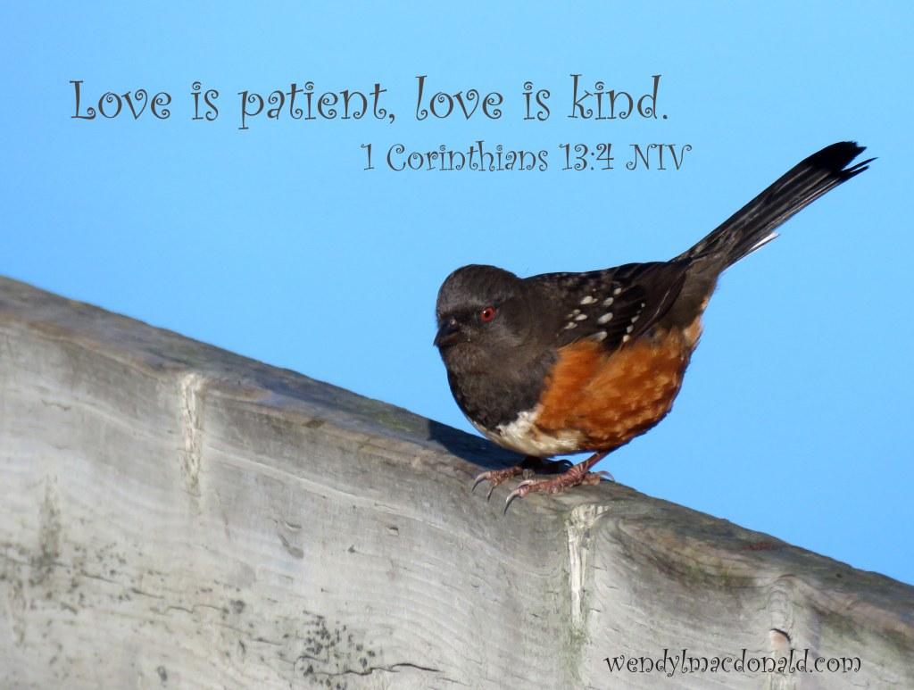Love is patient, love is kind. A Kiss of Kindness: Finding God's Comfort wendylmacdonald.com