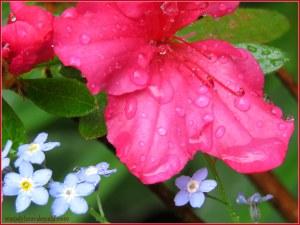 Gifts from the Garden #mygarden #memoir wendylmacdonald.com