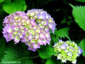 A Dear God Summer #Poem #mygarden wendylmacdonald.com